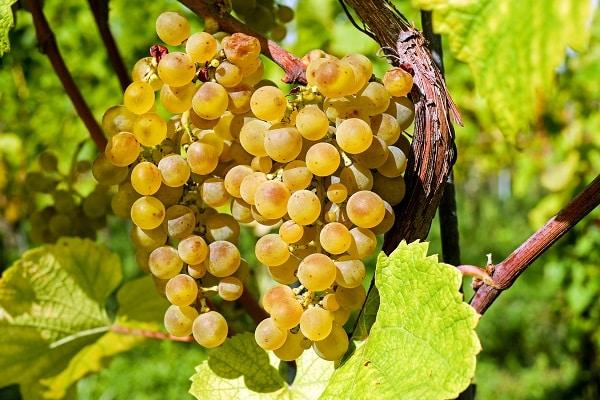 Team-building découverte du vignoble et des vins