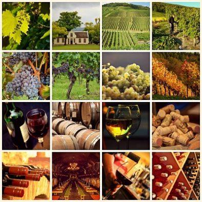Team-building les vignes, le vigneron, la cave et les vins